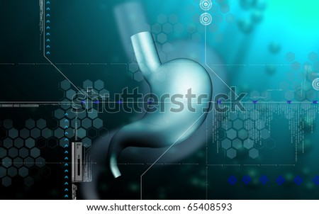 Digital illustration of  stomach  in colour  background 	 - stock photo