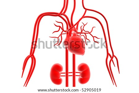 Digital illustration of vascular system in isolated background