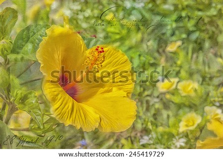 Digital oil painting of tropical yellow hibiscus - stock photo