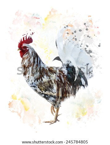 Digital Painting Of Colorful Rooster  - stock photo