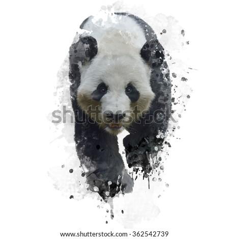 Digital Painting of Giant Panda Bear  - stock photo