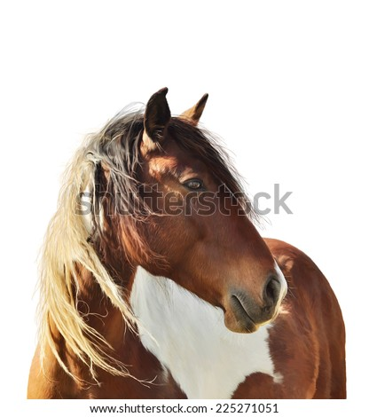 Digital Painting Of Paint Horse  On White Background - stock photo