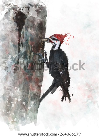 Digital Painting Of Pileated Woodpecker - stock photo