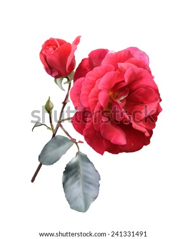 Digital Painting Of Red Rose Isolated On White Background - stock photo