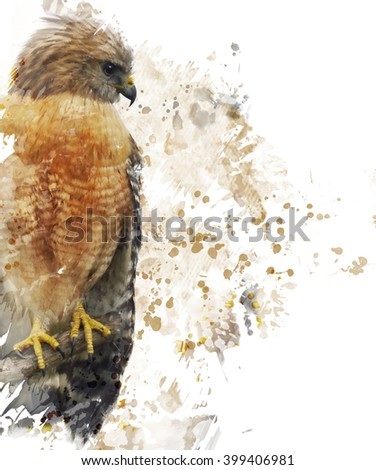 Digital Painting Of Red Shouldered Hawk - stock photo