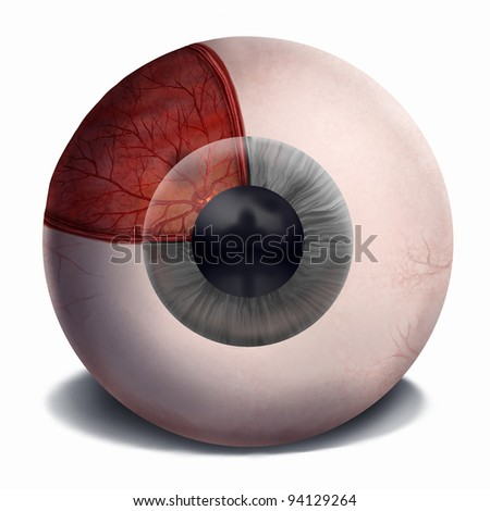 digital painting of the anatomy of the human eye - stock photo