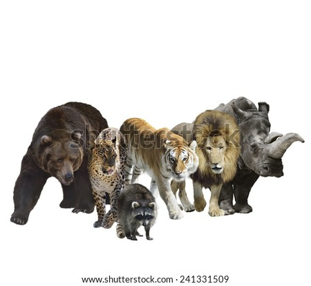 Digital Painting Of Wild Mammals Isolated On White Background - stock photo