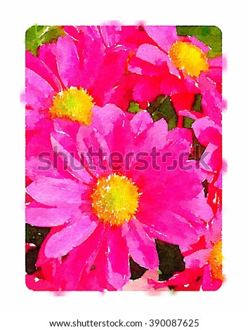 Digital watercolour of a pink daisy pollen flowers in spring. - stock photo