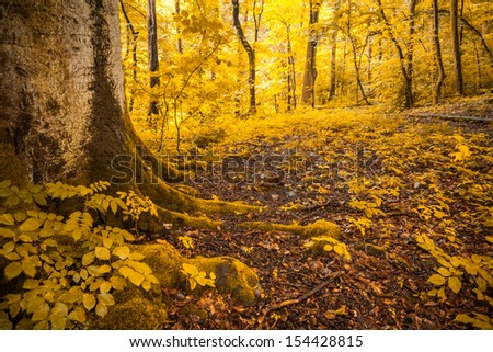 Digitally manipulated photo of a forest with lots of trees and bushes and fallen foliage on the ground to look like autumn - stock photo