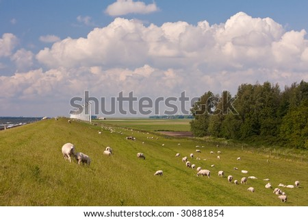 Dike in the Netherlands with sheep and windmills - stock photo