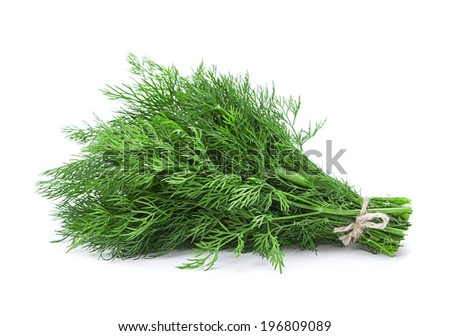 Dill aromatic herb closeup isolated on white background - stock photo