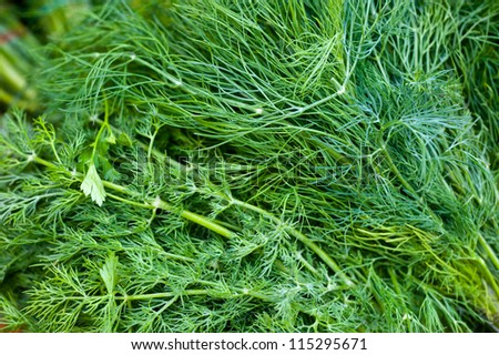 dill herb - stock photo