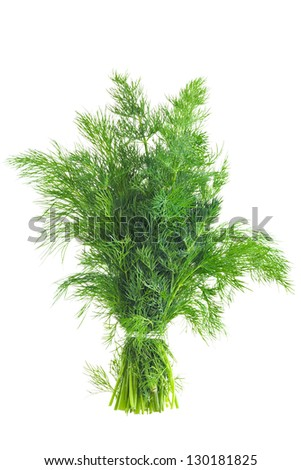 Dill Isolated - stock photo