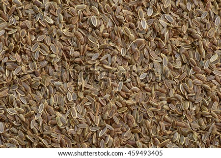 Dill seed background