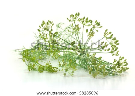 Dill with flowers on a white background