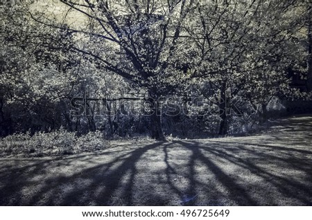 Dim shadows of a tree