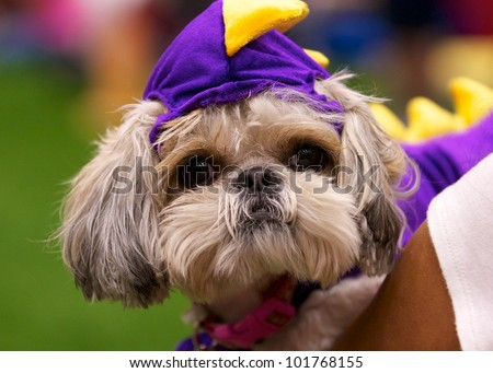Dino Dog - stock photo