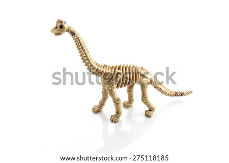 dinosaur bones on white background