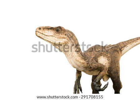 Dinosaur (Deinonychus Antirrhopus) isolated on white. Lifesize model 3.2 metres long. - stock photo
