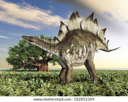 Dinosaur Stegosaurus Computer generated 3D illustration - stock photo