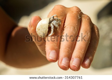 Diogenes-crab (hermit crab, pagurian, soldier crab) on a female hand - stock photo
