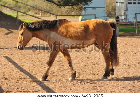 Dirt corral with a horse inside - stock photo