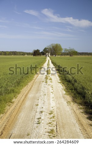 Dirt driveway leading through a field of green grass to farm house on the Eastern Shore of Maryland - stock photo