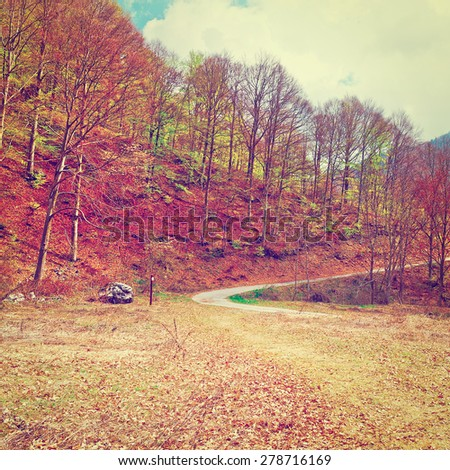 Dirt Forest Road on the Slopes of the Italian Alps in Piedmont, Instagram Effect