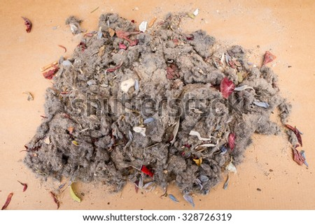 dirt from vacuum cleaner filter - stock photo