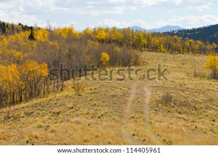 Dirt Path Through Fall Aspen Forest Colorado Wilderness - stock photo