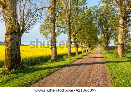 Dirt road alley in countryside landscape - stock photo