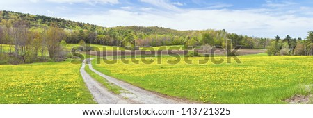 Dirt road and dandelions in spring farm field Maine landscape panorama. - stock photo