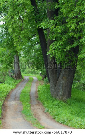 Dirt road and green trees with juicy leaves
