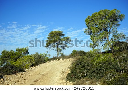 Dirt road and trees on the hill in Israel                                - stock photo