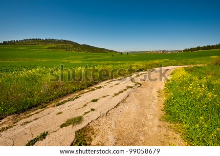 Dirt Road between Green Fields in Israel, Spring
