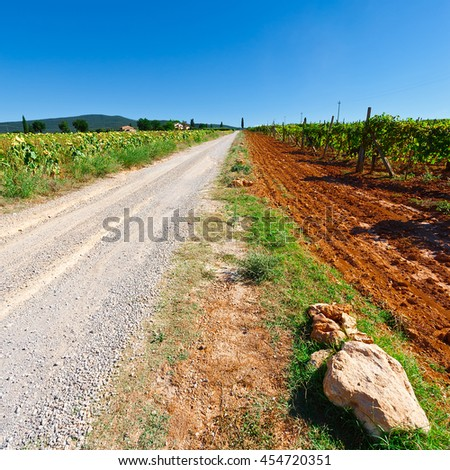 Dirt Road between Sunflower Field and Vineyards in Tuscany, Italy - stock photo