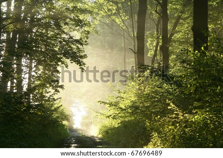 Dirt road crosses a lush deciduous forest  on a foggy spring morning. - stock photo