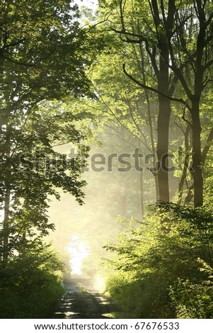 Dirt road crosses spring deciduous forest at the time of sunrise. - stock photo