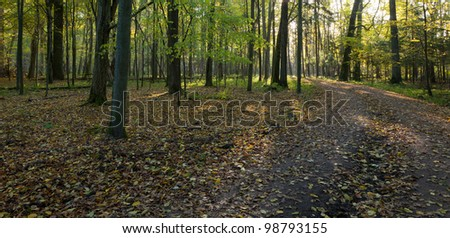 Dirt road crossing old deciduous stand in autumnal morning - stock photo
