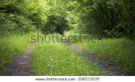 Dirt road going through a green countryside forest. - stock photo