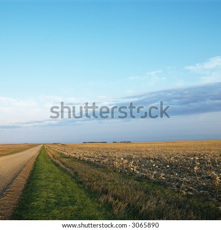 Dirt road going through dead cornfield in rural South Dakota. - stock photo