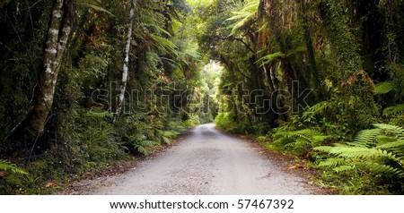 Dirt road going through thick, lush jungle - stock photo