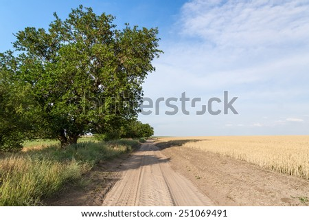 Dirt road in a field of wheat. A Sunny day. - stock photo