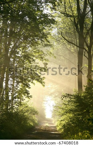 Dirt road in a fresh deciduous forest on a foggy spring morning. - stock photo
