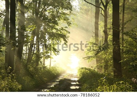 Dirt road in a fresh deciduous forest on a misty spring morning after the rain. - stock photo