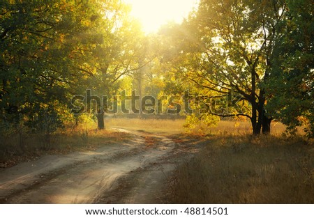 dirt road in autumn park at evening time