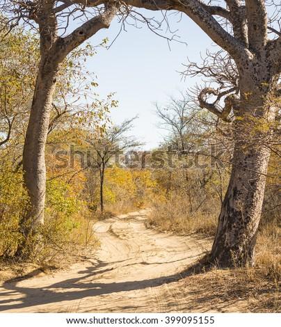 Dirt road in Botswana, Africa winding through the trees and bush - stock photo