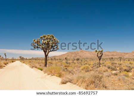 Dirt road in Joshua Tree National Park - stock photo