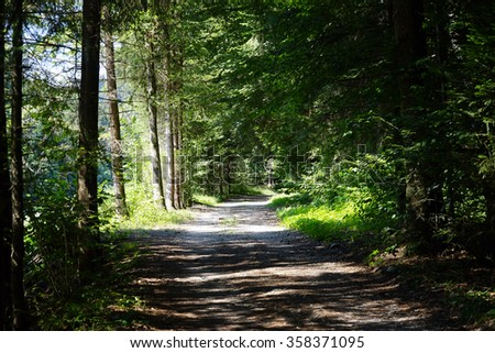 Dirt road in sunny forest in Switzerland