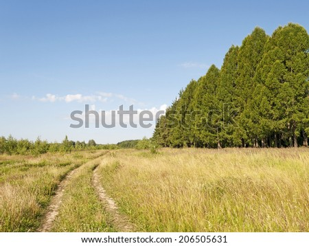 Dirt road in the field along the forest, summer sunny day - stock photo
